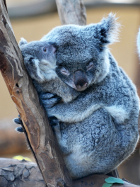 2-cute-animal-hugs-4-6-7-8-9-3-2-5-4-2-3-7-5-4-1